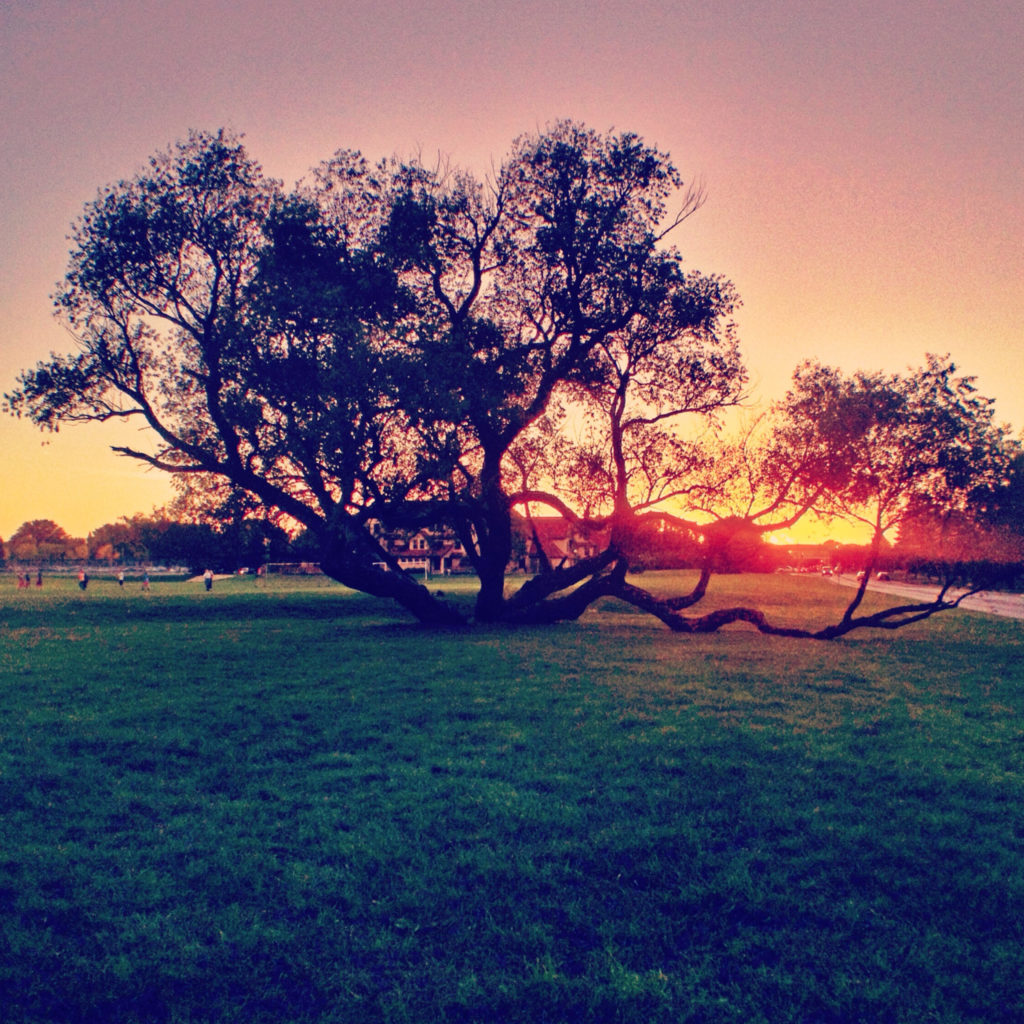 Crazy Tree_Summer Sunset